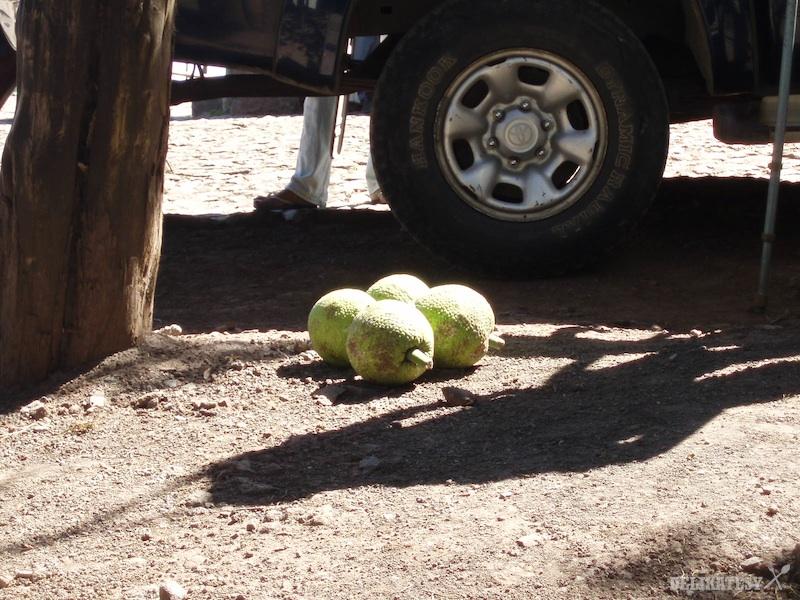 Fruit de pao - chlebovník