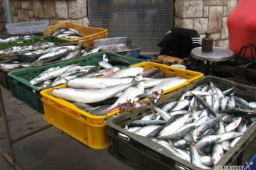 Trh s čerstvými rybami