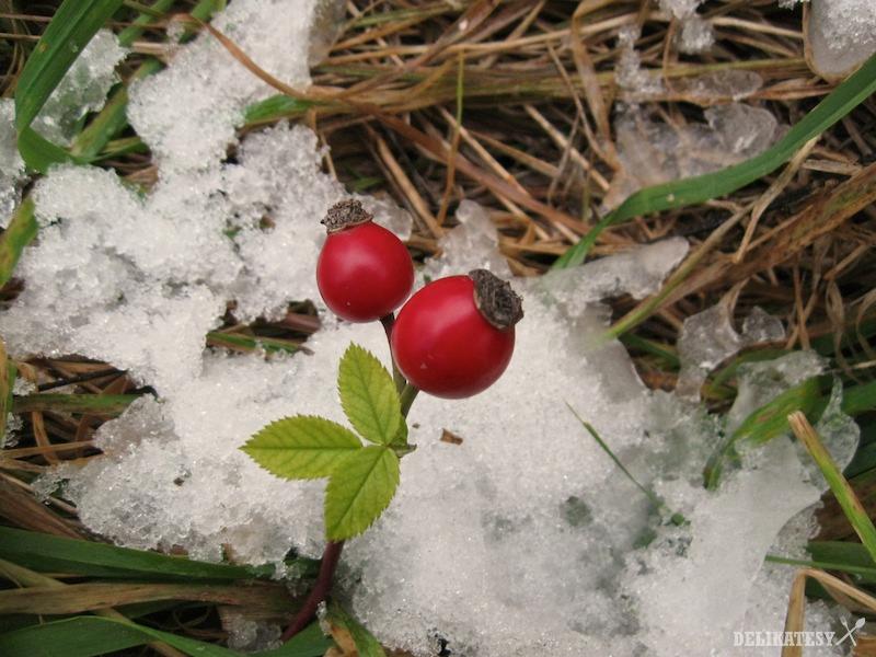 Šípky po prvom snežení