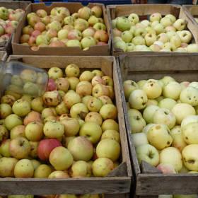 Jablká ako jeden zo symbolov nastupujúcej jesene a odrody, ktoré u nás nenájdete na každom rohu
