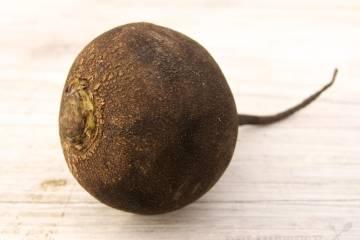 Čierna reďkovka