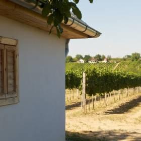 Strekovské vinice